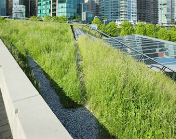 green roof - sedum roof